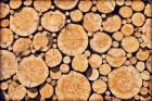 Feuerholz-Welches eignet sich am meisten?
